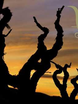 La Cova dels Vins