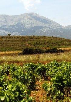 Winery Arts